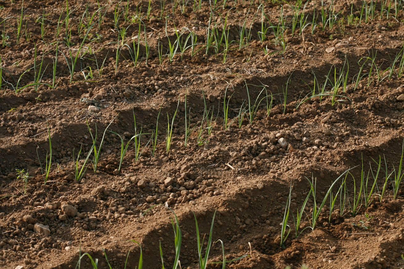 Convite à Apresentação De Candidaturas Para Investimentos Relacionados Com A Produção, Transformação E Comercialização De Produtos Agrícolas