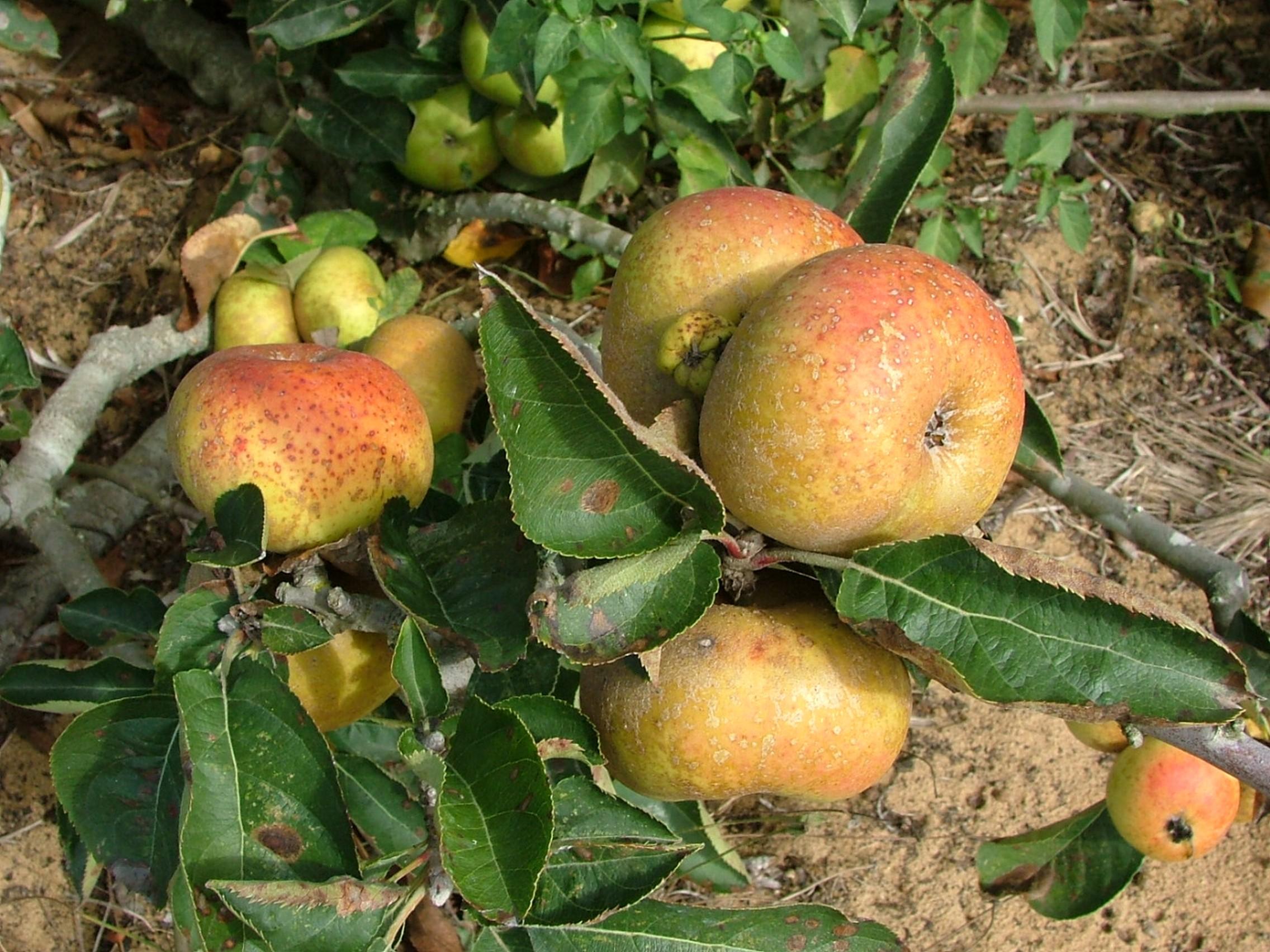 Workshop Agricultura Biológica E Desenvolvimento Rural – Sintra