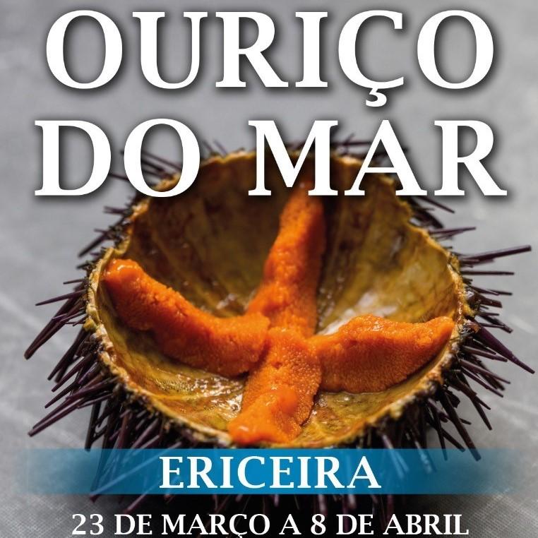 4.º Festival Internacional Ouriço-do-Mar Da Ericeira