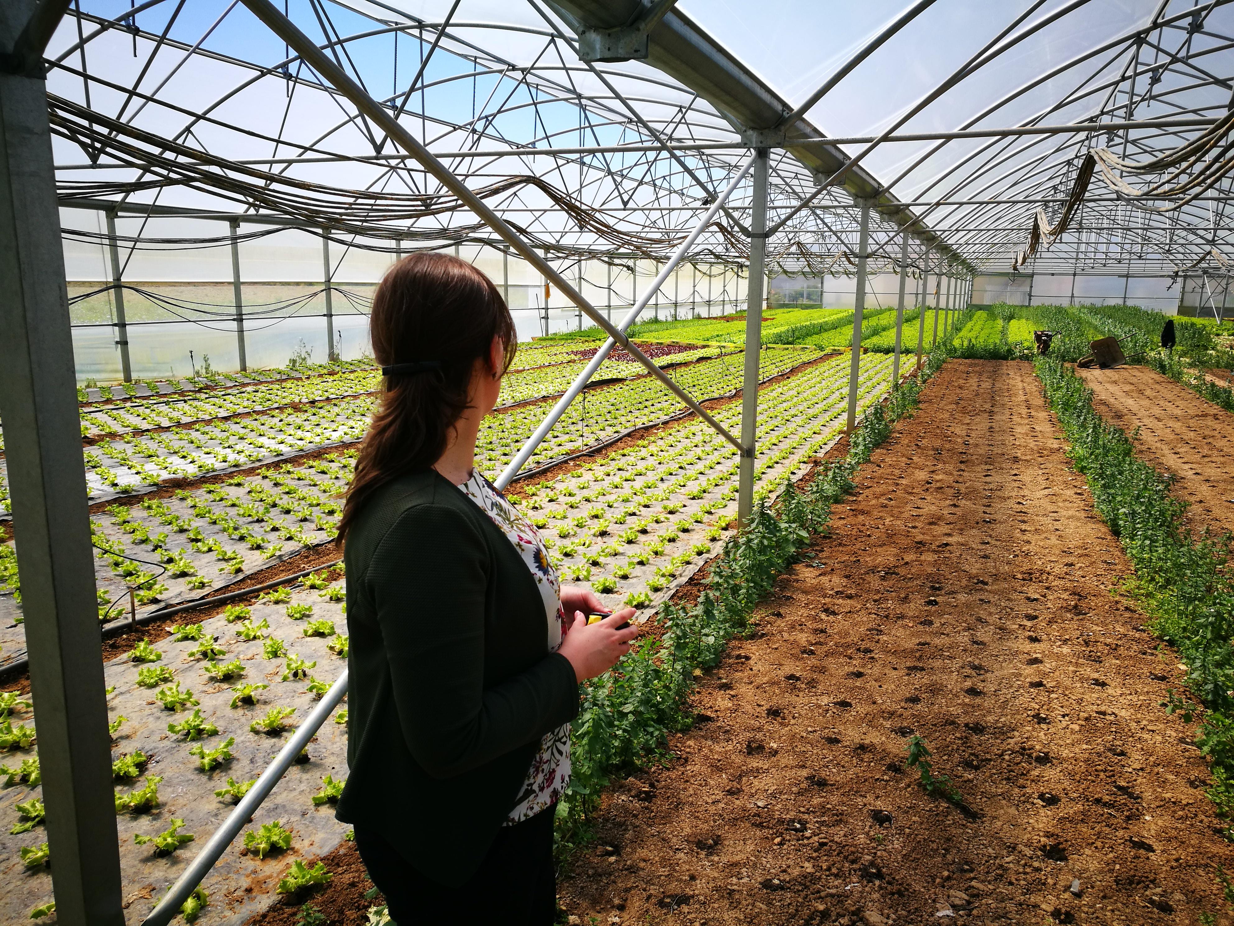 A2S Recebe 500 Mil Euros De Candidaturas Para Modernização E Capacitação De Explorações Agrícolas